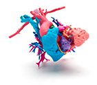 3D Printed Heart in Full Color